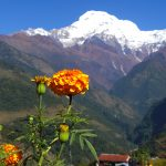 nepal blomster